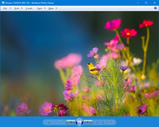 get windows photo viewer back in windows 10